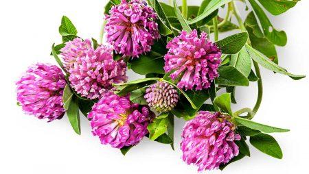 Ползи за здравето от прием на фитоестрогени при менопауза